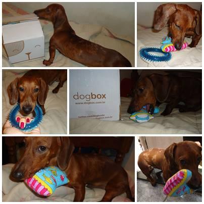 dogbox salsichinha