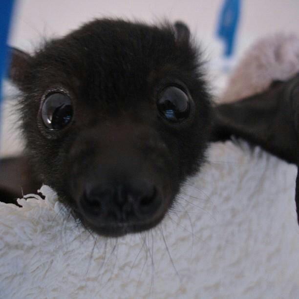 morcego selfie